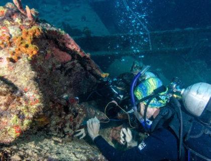 Conservação: expedições para remoção do coral-sol retiram mais de 3 mil colônias
