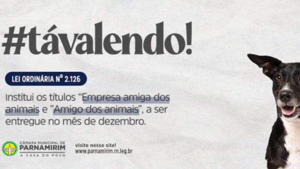 #TaValendo: Câmara de Parnamirim concederá títulos a empresas e pessoas ativistas em defesa dos animais